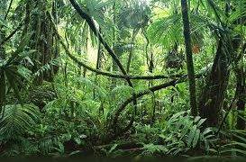 Region de la jungle au Guatemala