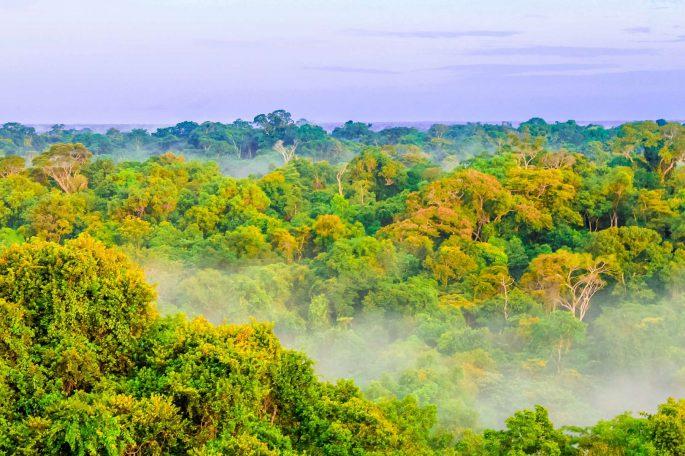 Site de Tikal au Guatemala