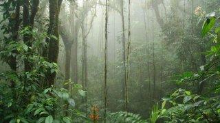 Covid-19 : comment voyager au Guatemala